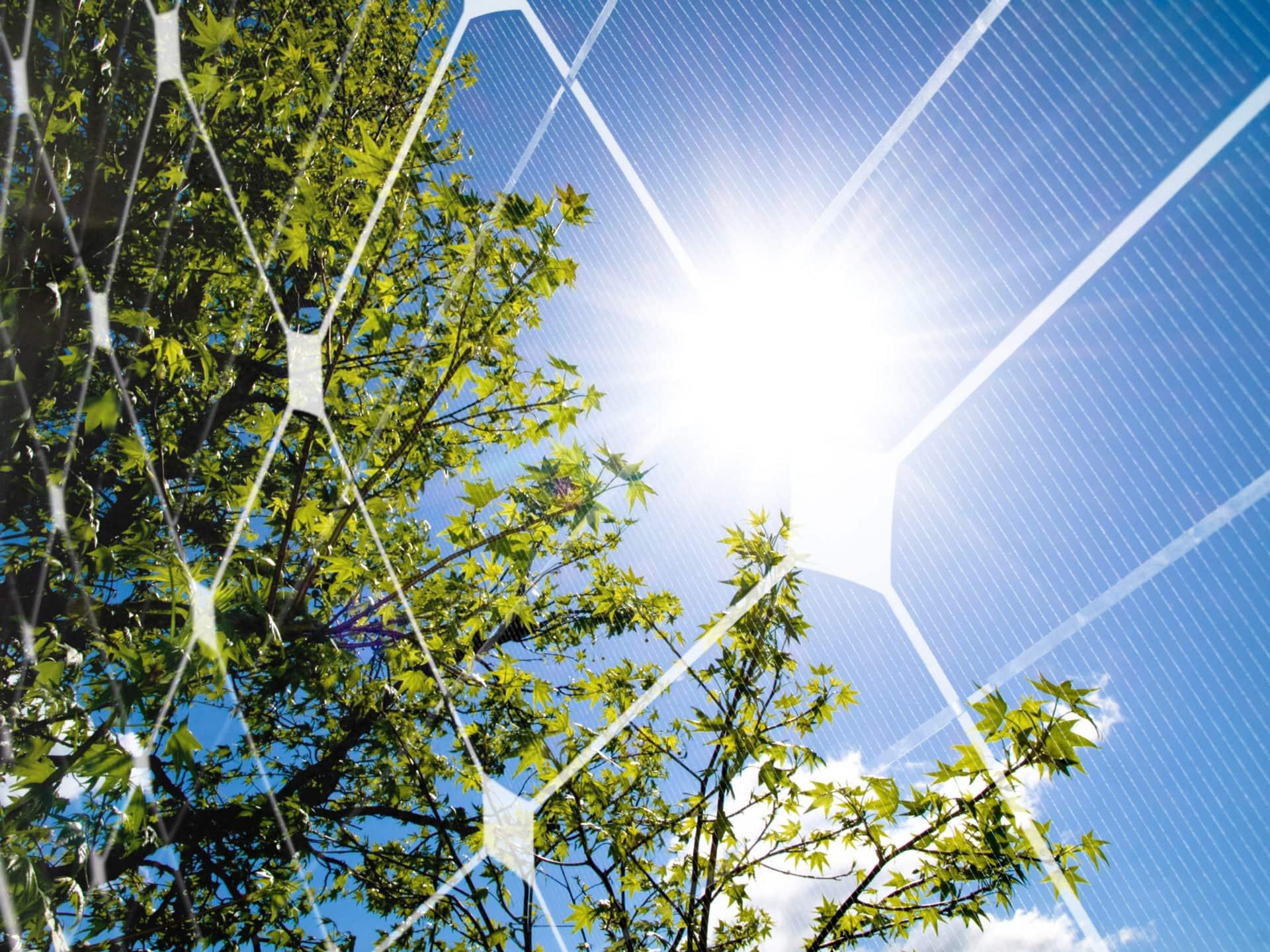 sonne baum photovoltaik